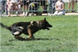 Kent Police K9 in Competition Challenge