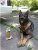 K9 Felo with Trophy